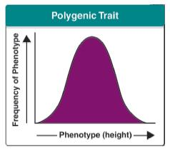 Polygenic Traits Biology - ma