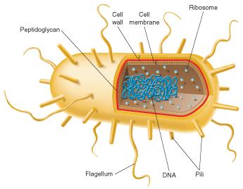 cosbiology / 16-01 – Bacteria  cosbiology / 16...
